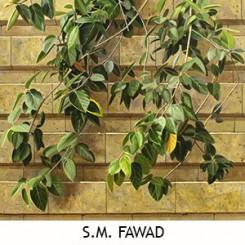 005 - SM Fawad